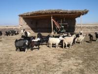 tribal-life-anatolia