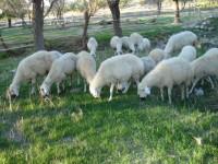 wool-anatolia