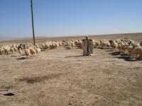 wool-kilim-anatolia